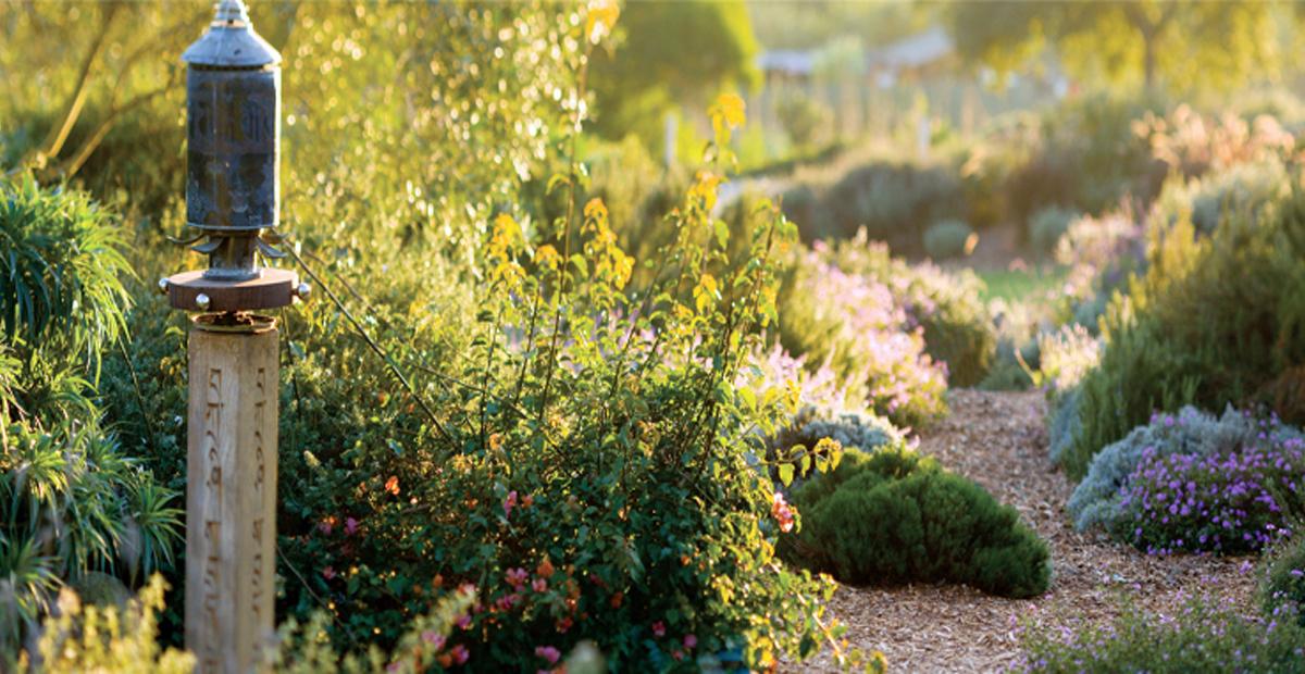 IPAP-Pacifica-garden-cut-high
